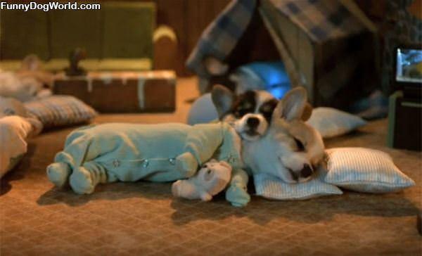 Cutest Sleeping Puppies Ever