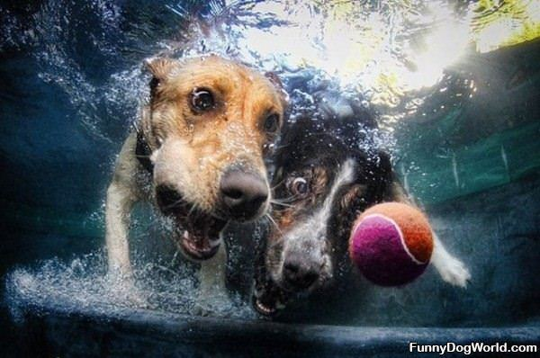 Diving For The Ball
