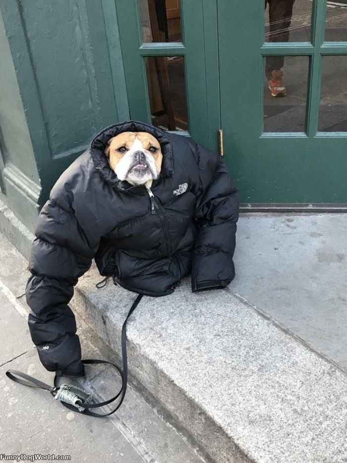 Do You Like My New Coat