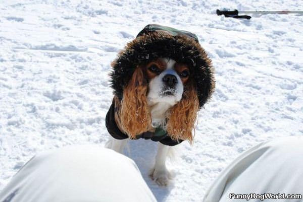 Dog All Bundled