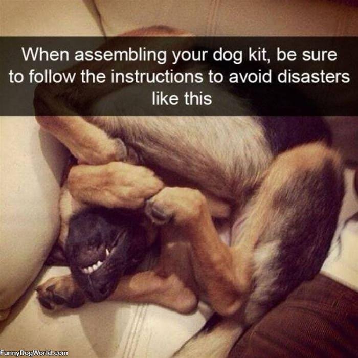 Dog Assembly