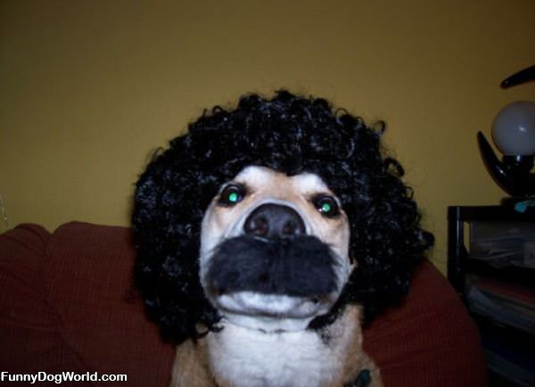 Dog Disguise