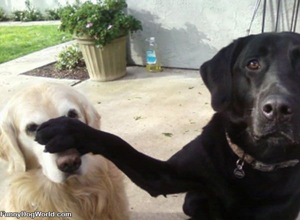 Dog Dont Listen To Him
