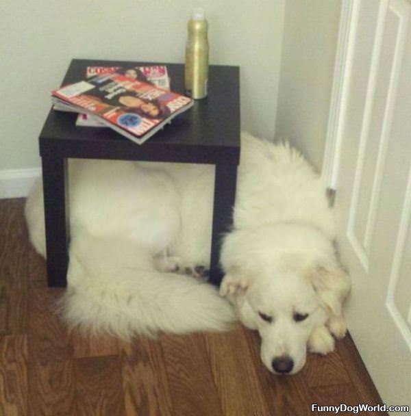 Dog Fits Anywhere