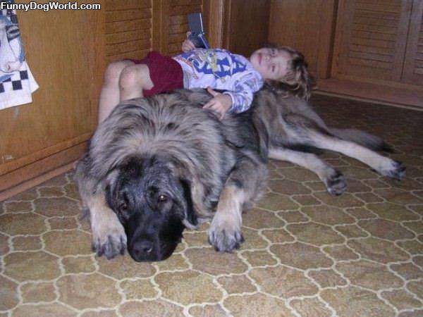 Dog Fluffy Bed