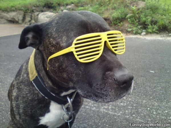 Dog Has Cool Glasses