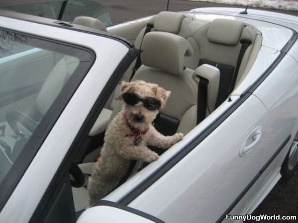 Dog Is Ready For A Ride