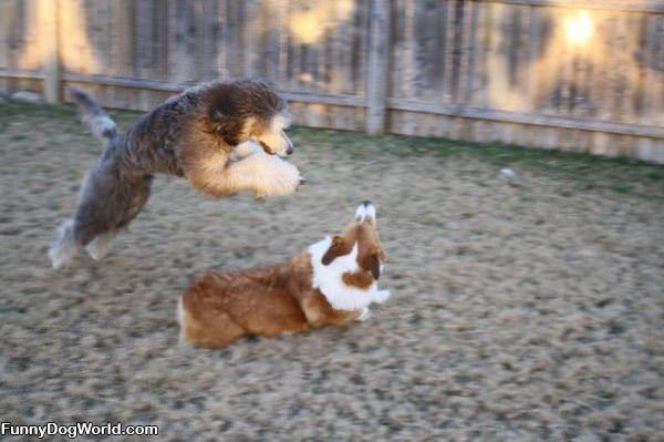 Dog Jump Attack