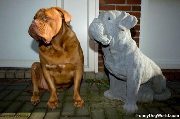 Dog Look Alikes