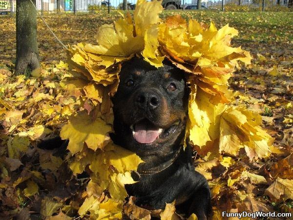 Dog Loves Fall