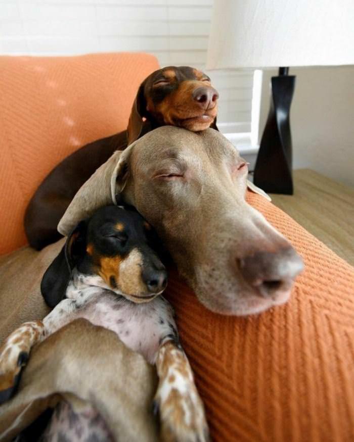 Dog On Dog On Dog