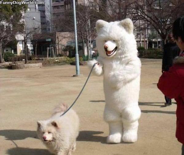 Dog Walking The Dog