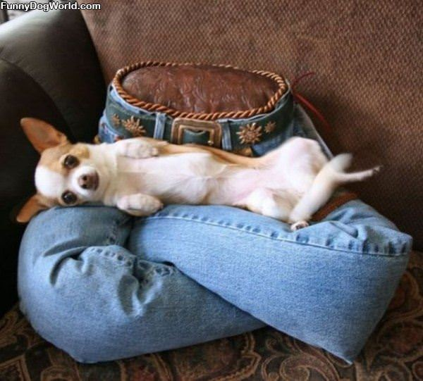 Doggie Bed