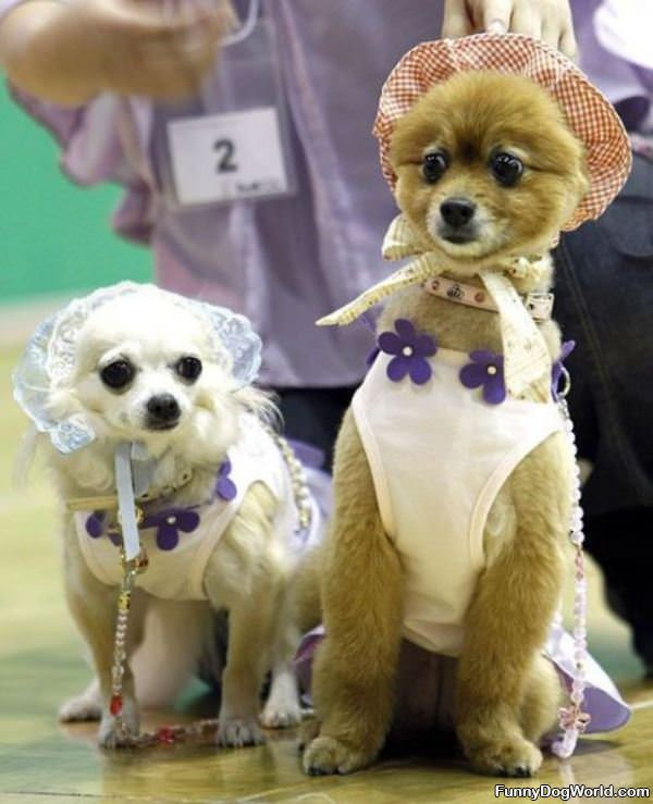 Doggie Dress Up