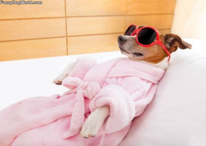 Doggy Spa Day