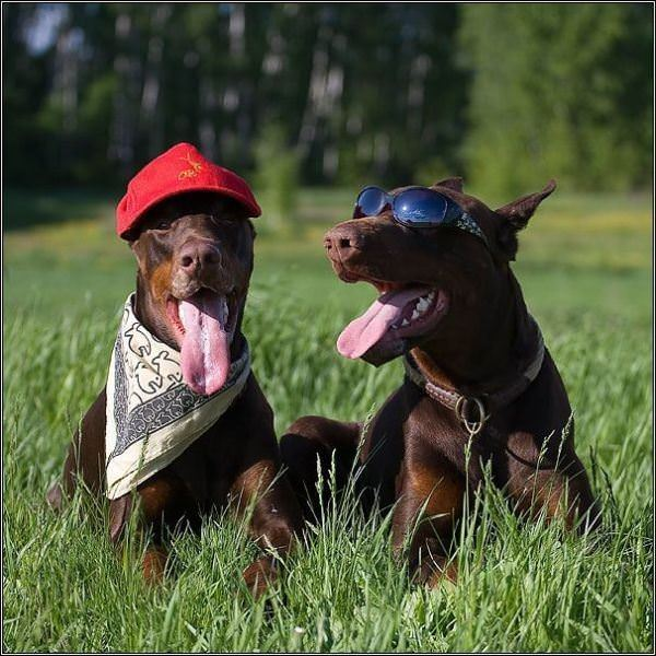 Dogs Chillin