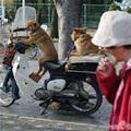 funny dog 2