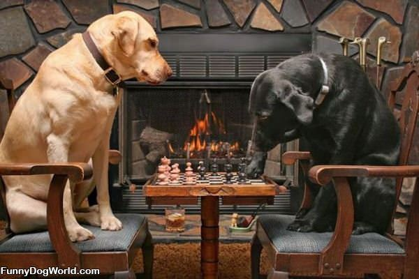Dogs Playing Chess