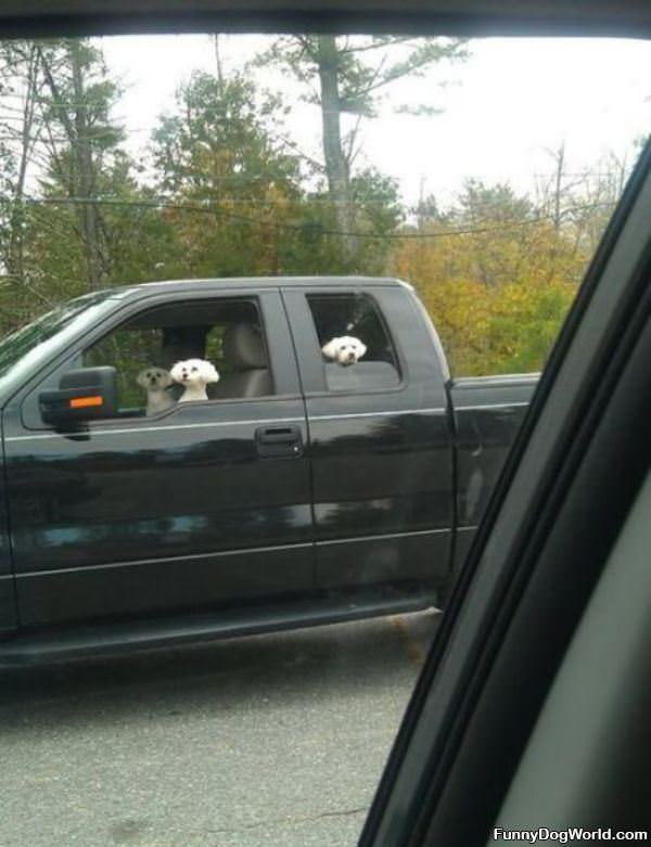 Dogs Taking Over
