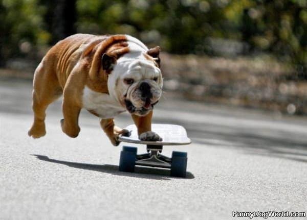 Doing Some Skateboarding
