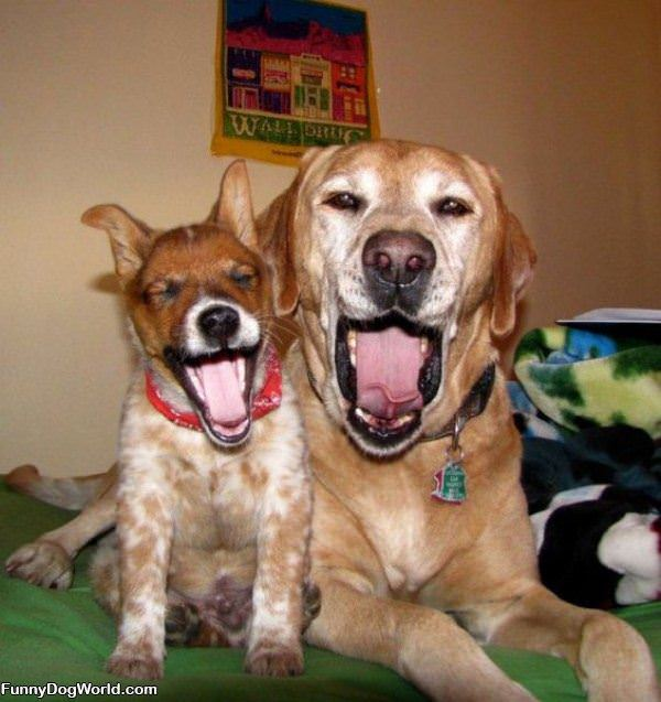 Double Yawn