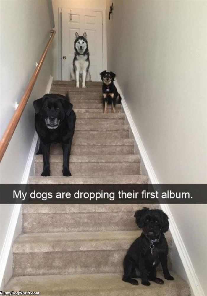 Dropping An Album