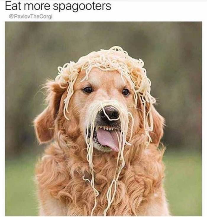 Eat More Spagooters