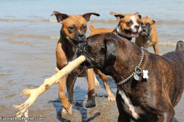 Everyone Wants The Stick