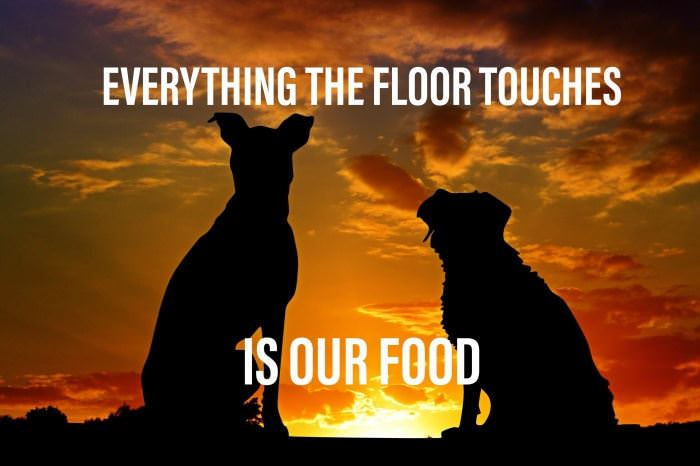 Everything That Touches The Floor