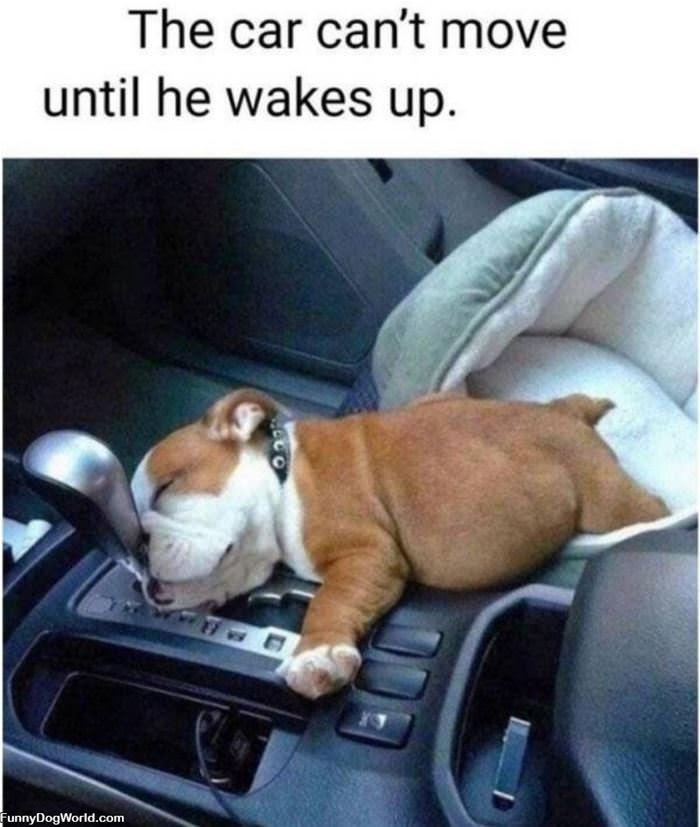 Fell Asleep