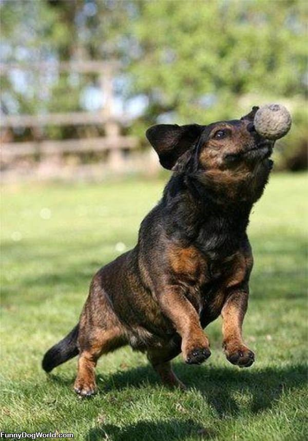 Fetch The Ball