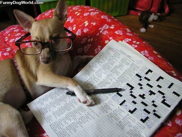 Finished Your Crossword