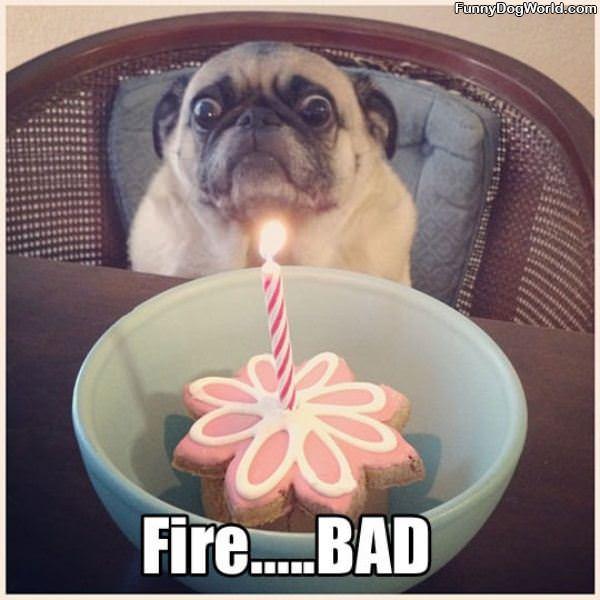 Fire Bad