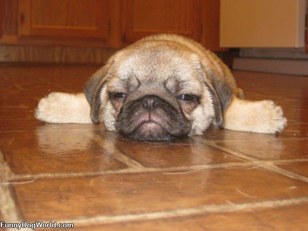 Flat Puppy