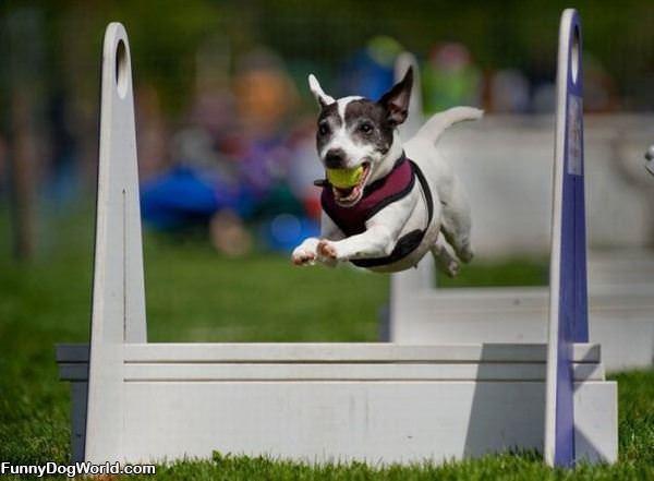 Flight Dog