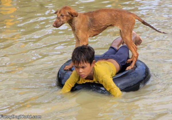Floating Dog