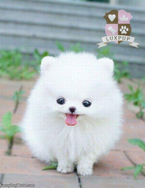 Fluffy Face