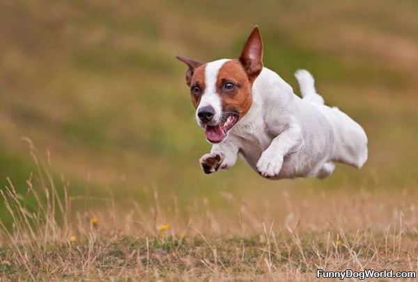 Flying Dog Is Flying