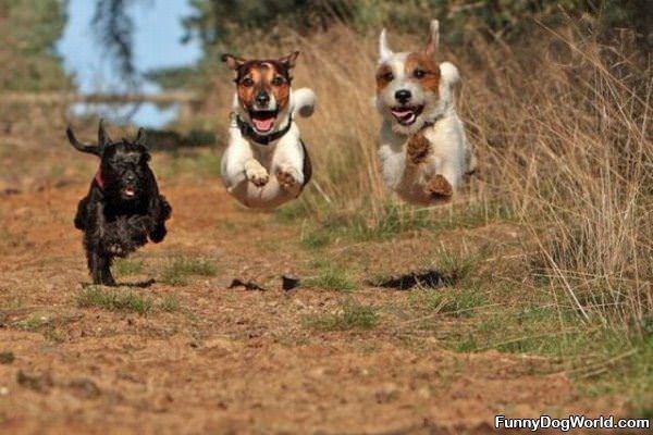Flying Dog Team