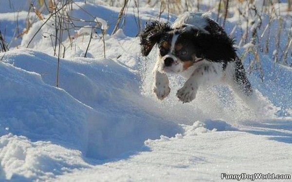 Flying Running Dog