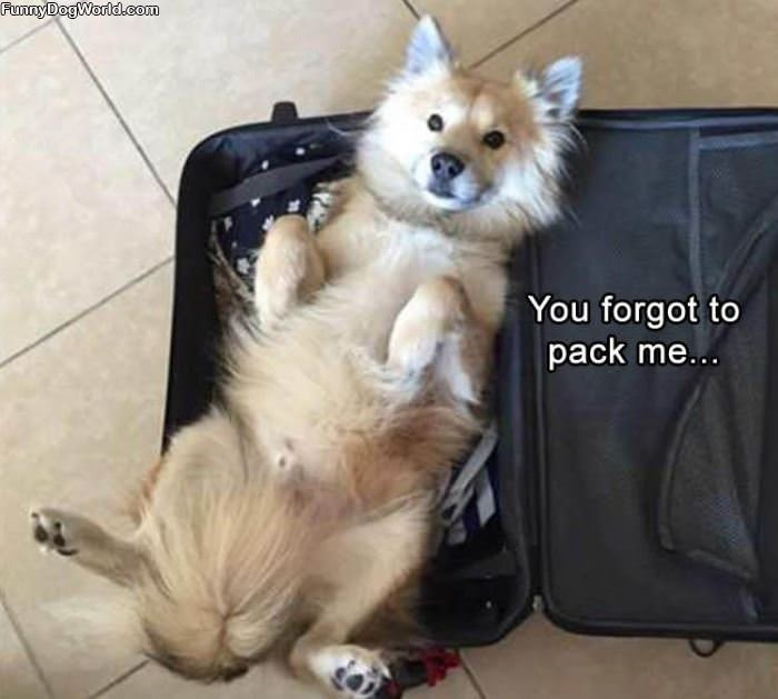 Forgot To Pack Me