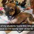 Found This Little Girl
