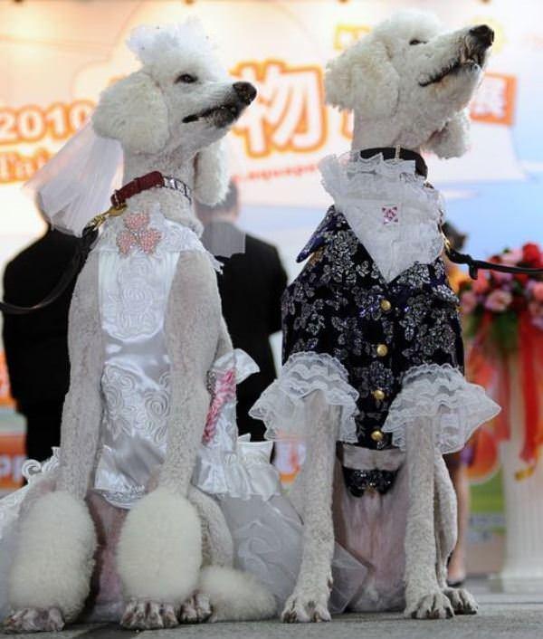Funny Dog Dressup