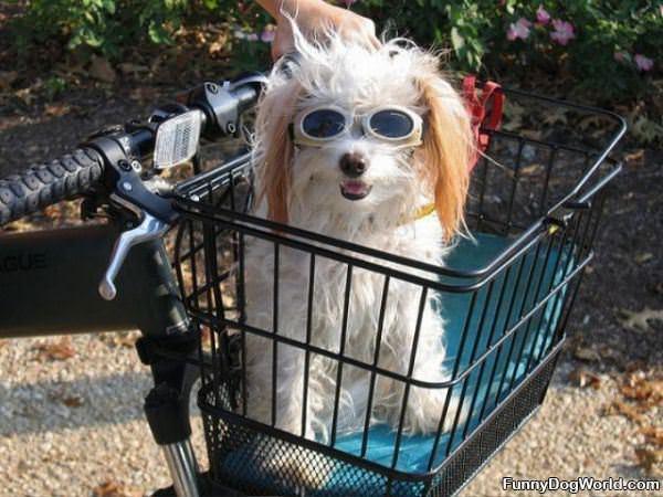 Funny Dog Glasses
