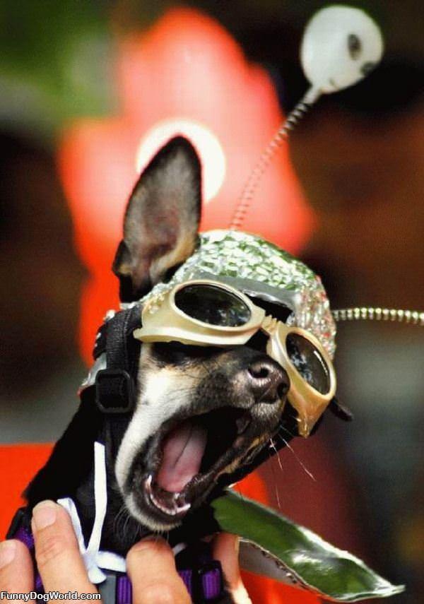 Funny Face Dog