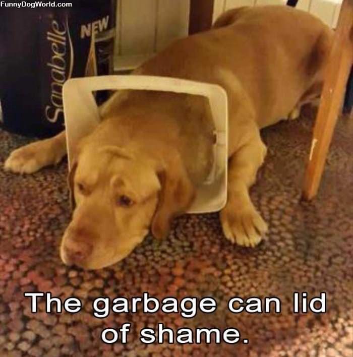 Garbage Can Lid Of Shame