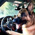 Get In The Car Dear