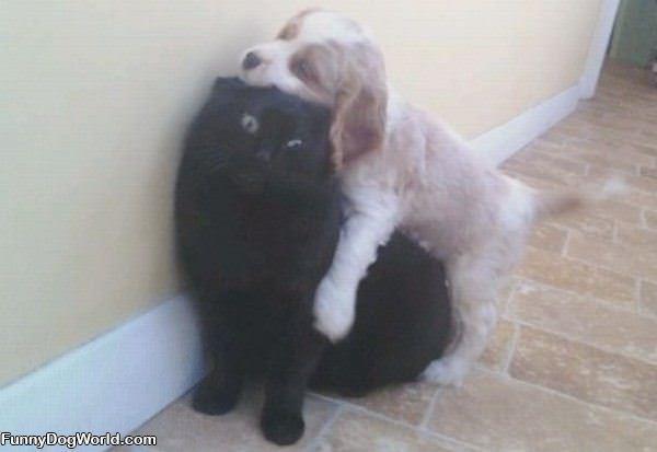 Get Off Of Me Dog