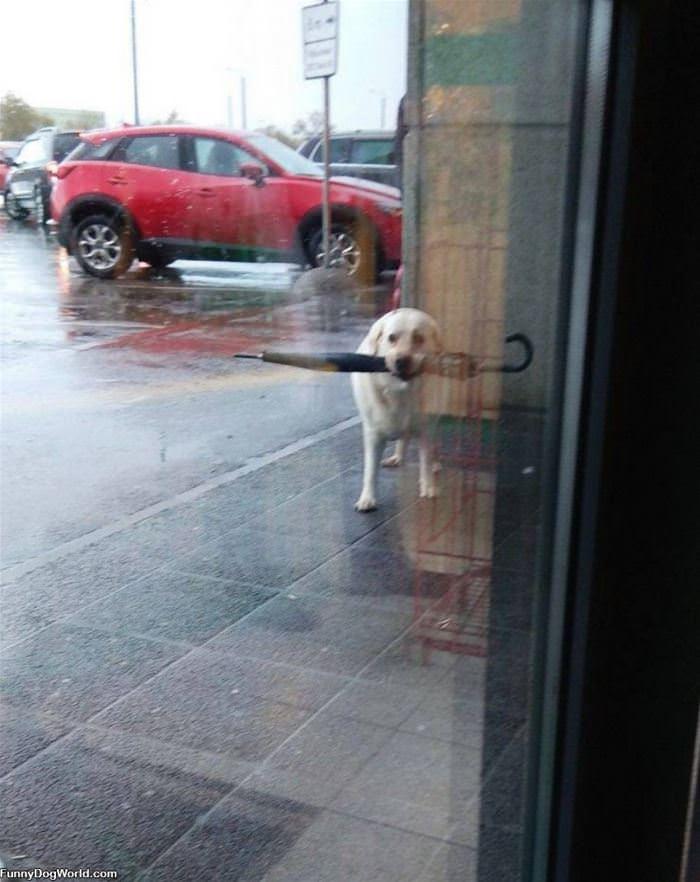 Getting An Umbrella