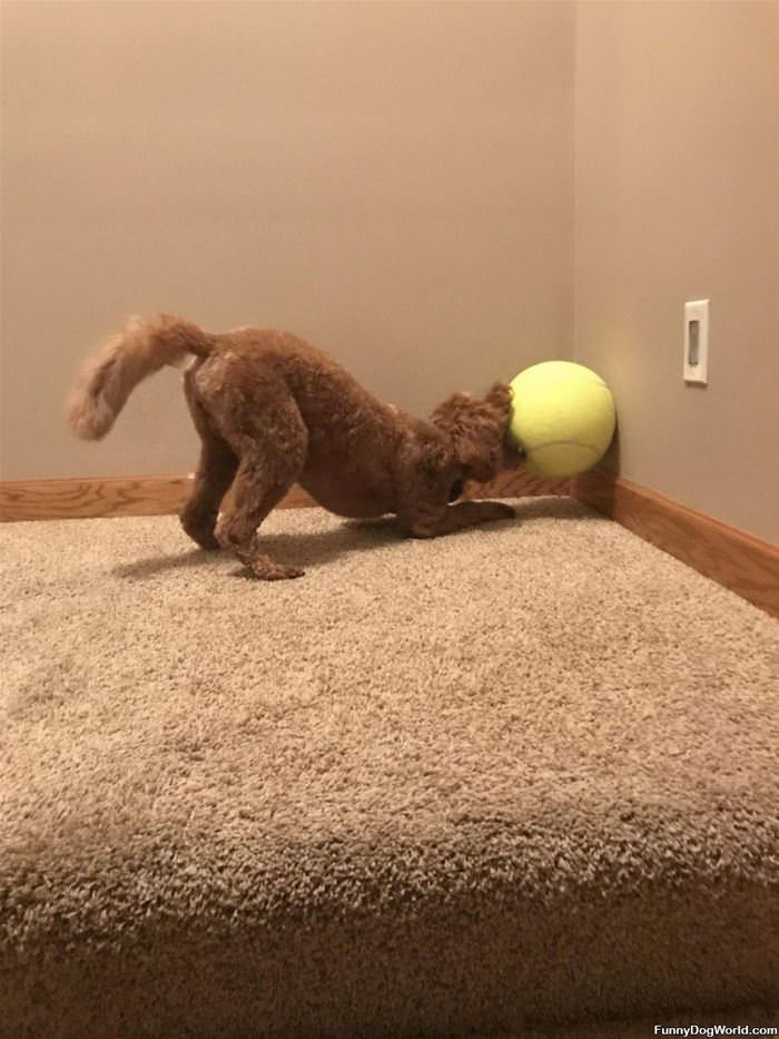 Getting The Ball